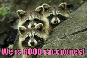 We is GOOD raccoones!