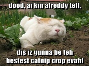 dood, ai kin alreddy tell,  dis iz gunna be teh                                                  bestest catnip crop evah!