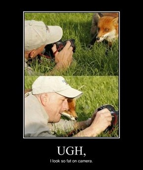 Fox Are So Vain