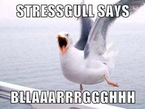 STRESSGULL SAYS  BLLAAARRRGGGHHH