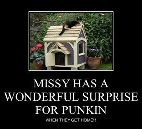 MISSY HAS A WONDERFUL SURPRISE FOR PUNKIN