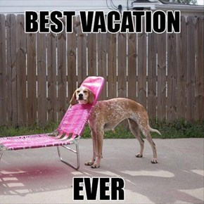 Sarcastic Dog Hates Vacation