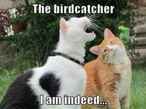 The birdcatcher  I am indeed...