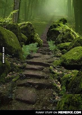 Sherwood forest ,Nottinghamshire, england