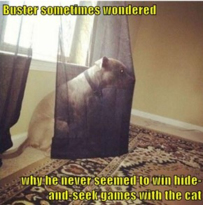 Buster sometimes wondered  why he never seemed to win hide-and-seek games with the cat