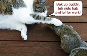 Bak up buddy, teh nuts hab awl lef fer werk!
