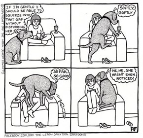 Dogs Are Considerate