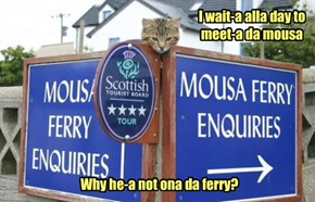Italian cat gotta enquiry...