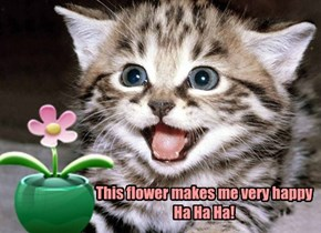 Happy Flower/Happy Cat