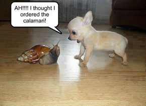 AH!!!! I thought I ordered the calamari!