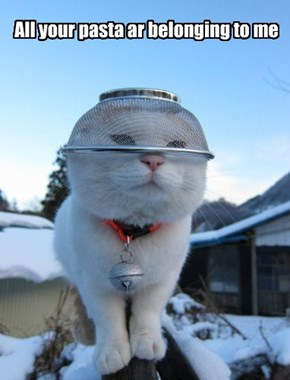 Ceiling Cat meet the Colander Cat