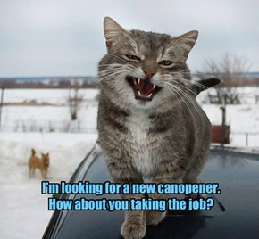I'm looking for a new canopener.  How about you taking the job?