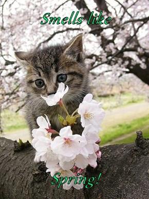 Smells like  Spring!