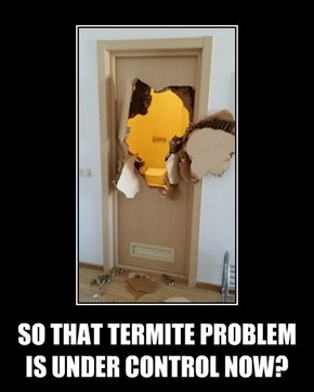 SO THAT TERMITE PROBLEM IS UNDER CONTROL NOW?