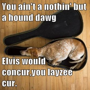 You ain't a nothin' but a hound dawg  Elvis would concur,you layzee cur.