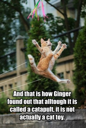 And that is how Ginger found out that alltough it is called a catapult, it is not actually a cat toy.