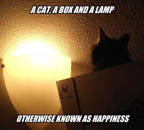 A CAT, A BOX AND A LAMP