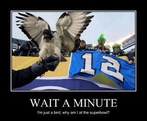 So That's What a Seahawk Is...