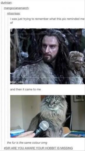 Felines Make a Fine Fur
