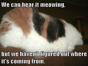 We can hear it meowing,  but we haven't figured out where it's coming from.
