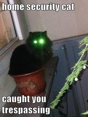 home security cat  caught you trespassing