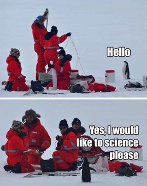 This Penguin Is a Brilliant Scientist