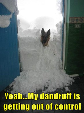 Yeah...My dandruff is getting out of control