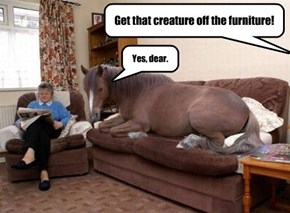 Get that creature off the furniture!