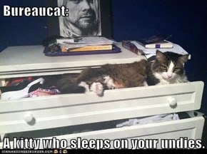 Bureaucat:  A kitty who sleeps on your undies.