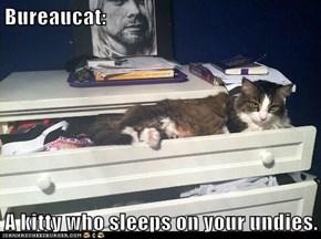 Bureaucat:  A kitty who sleeps on your undies.