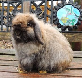 Whatever you do DONT LOOK at Bunnies for sale on Craiigslist, DONT DO IT, just DONT LOOK, NO dont look.....