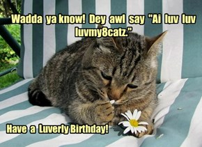 Happy Birthday luvmy8catz!