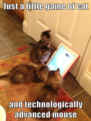 Just a little game of cat  and technologically advanced mouse