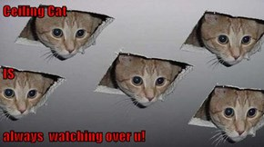 Ceiling Cat IS always  watching over u!