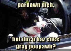 pardawn meh,  but duz u haz enee                                        gray poopawn?