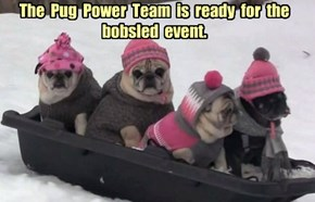 The  Pug  Power  Team  is  ready  for  the  bobsled  event.