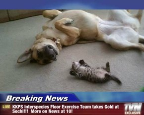 Breaking News - KKPS Interspecies Floor Exercise Team takes Gold at Sochi!!!  More on News at 10!