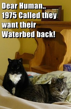 Dear Human..       1975 Called they want their Waterbed back!