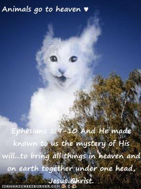 Animals go to heaven ♥  Ephesians 1:9-10 And He made known to us the mystery of His will...to bring all things in heaven and on earth together under one head, Jesus Christ.