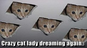 Crazy cat lady dreaming again..