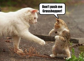 Don't push me Grasshopper!