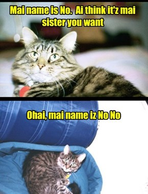 Our Hoomin Always Addresses Us So