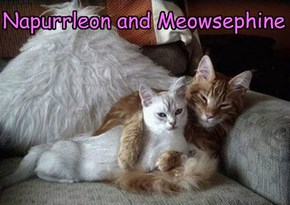 Napurrleon and Meowsephine