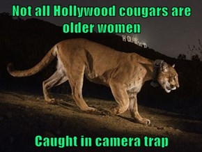 Not all Hollywood cougars are older women  Caught in camera trap