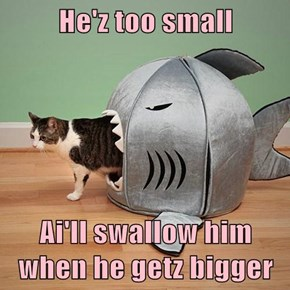 He'z too small  Ai'll swallow him when he getz bigger