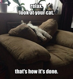 relax. look at your cat.         that's how it's done.