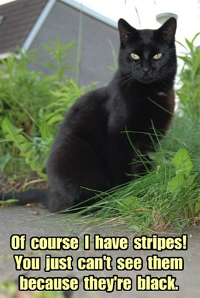 Of  course  I  have  stripes!  You  just  can't  see  them  because  they're  black.