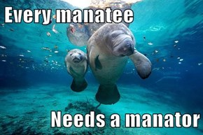 Every manatee  Needs a manator
