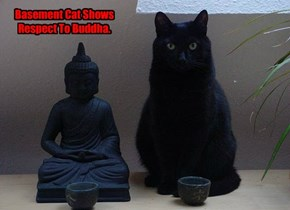 Basement Cat Shows Respect To Buddha.