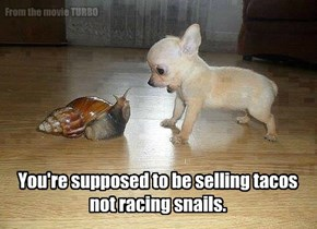 You're supposed to be selling tacos not racing snails.